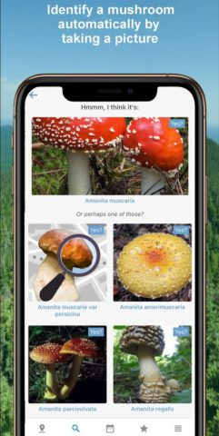 Mushroom Identify – Automatic picture recognition